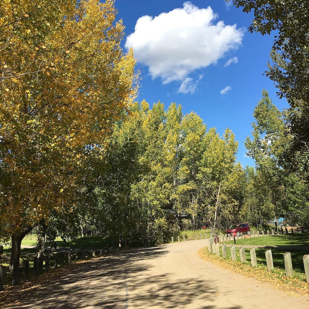 We love this time of year! #Fall #Leaves #Nature #Outdoors #RedDeer #BowerPonds #Favourites #Yellow #September #Parks #Creation #Trees #Sunshine #BlueSkies