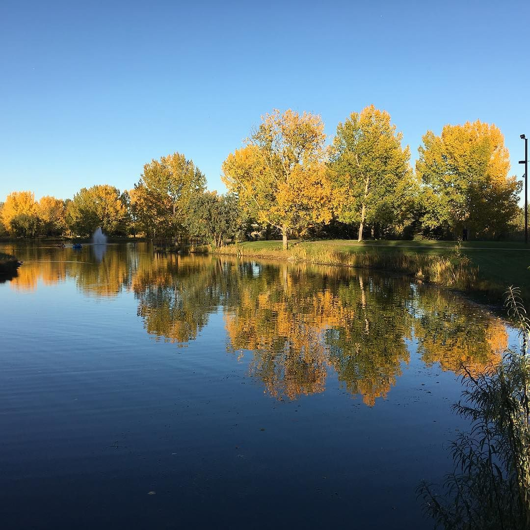 The leaves start to fall… #BowerPonds #RedDeer #YQF #Fall #Yellow #Reflections